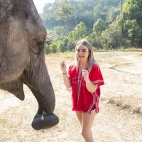 Elephant Experience in Chiang Mai