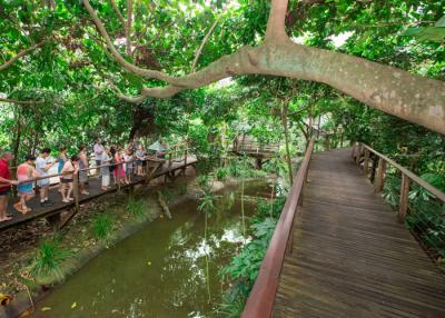 Cape Tribulation, Daintree and Wildlife Eco Experience