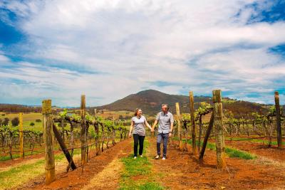Exploring the vines Hunter Valley