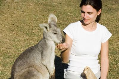 Feeding Kangarros at Featherdale Wildlife Park