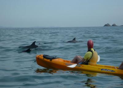Kayak with Dolphins Tour