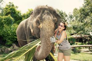Meeting The Elephants in Vietnam